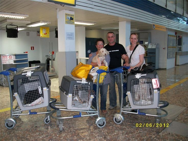 Aus Bulgarien konnten wir als Flugpaten, vier Hunde mit nach Deutschland nehmen. Ron Geese Stiftung
