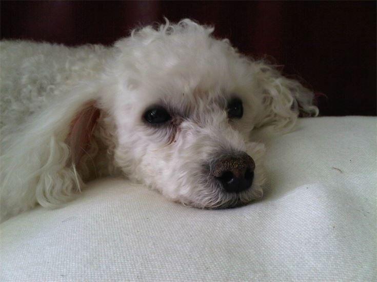Zac, very special old boy