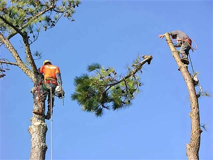 tree pruning, tree trimming, dead branch removal, dead branch removal pebble beach, dead branch removal carmel, dead branch removal monterey, dead branch removal monterey county, dead branch removal pacific grove, dead branch removal seaside, dead branch removal carmel valley, dead branch removal monterey peninsula, dead branch removal pebble beach ca, dead branch removal pebble beach ca, dead branch removal monterey ca, dead branch removal pacific grove ca, dead branch removal carmel valley ca, dead branch removal seaside ca, remove dead branch, remove dead branch pebble beach, remove dead branch pebble beach ca, remove dead branch carmel, remove dead branch carmel ca, remove dead branch monterey, remove dead branch monterey ca, remove dead branch monterey county, remove dead branch pacific grove, remove dead branch pacific grove ca, remove dead branch seaside, remove dead branch seaside ca, remove dead branch carmel valley, remove dead branch carmel valley ca, remove dead branches, remove dead branches pebble beach, remove dead branches pebble beach ca, remove dead branches carmel, remove dead branches carmel ca, remove dead branches monterey, remove dead branches monterey ca, remove dead branches monterey county, remove dead branches pacific grove, remove dead branches pacific grove ca, remove dead branches seaside, remove dead branches seaside ca, remove dead branches carmel valley, remove dead branches carmel valley ca, tree trimming pebble beach, tree pruning pebble beach, trees pruning, tree pruners, oak tree trimming, prune trees, tree trimming monterey ca, tree trimming service, prune tree, tree trimming pacific grove, tree pruning monterey ca, tree trimming carmel ca, tree pruning carmel ca, tree pruning pebble beach ca, tree pruning service pebble beach ca, pine tree pruning, oak tree pruning, tree pruning carmel valley, tree trimming pebble beach ca, tree pruning service carmel ca, tree trimming service carmel ca, tree pruning service carmel valley ca, t