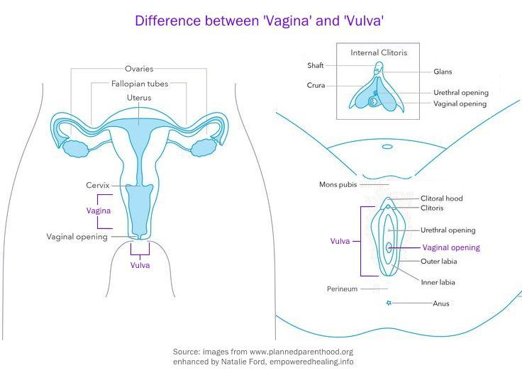 Two images side by side, one showing female reproductive organs from front-on view, second showing labelled vulva from underneath view