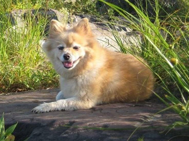 My granddog, Jade