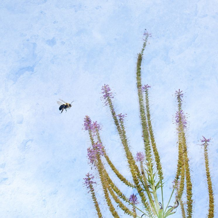 Flight of the Bumblebee by Sara Harley