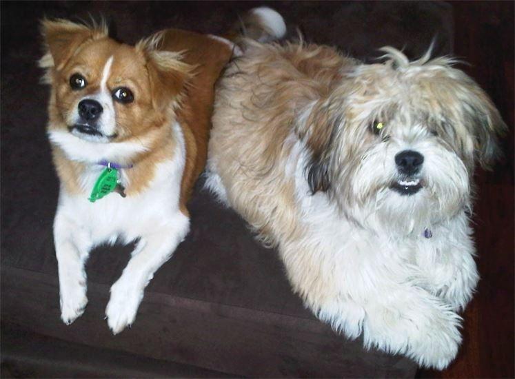 Molly & Rosie very cute
