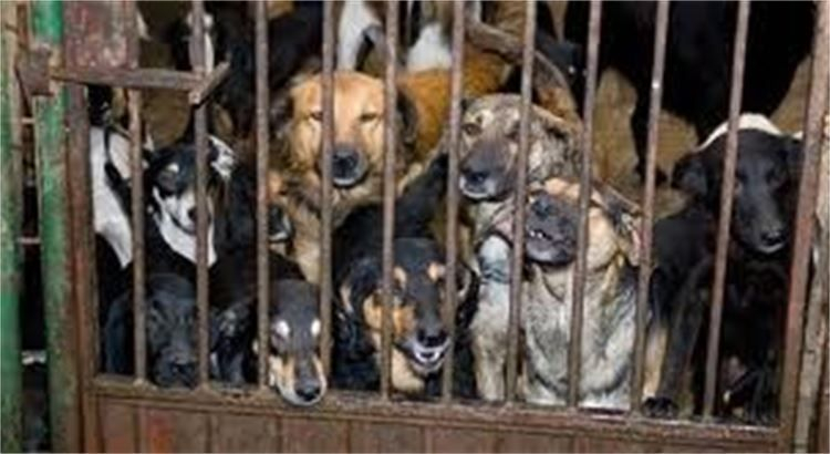 ...viele hunde hinter Gitter.