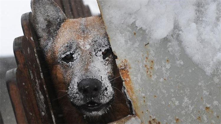 hund im eiskalten winter, rumänien