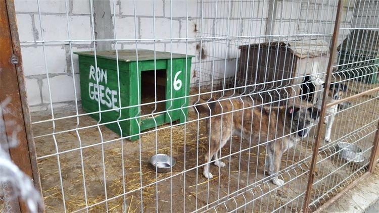 Hundehütten für das Tierheim -Moreni- in Rumänien.
