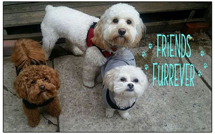 Z Dog will provide you with experienced, loving doggie day care, dog walks & cat care, pet sitting & boarding .