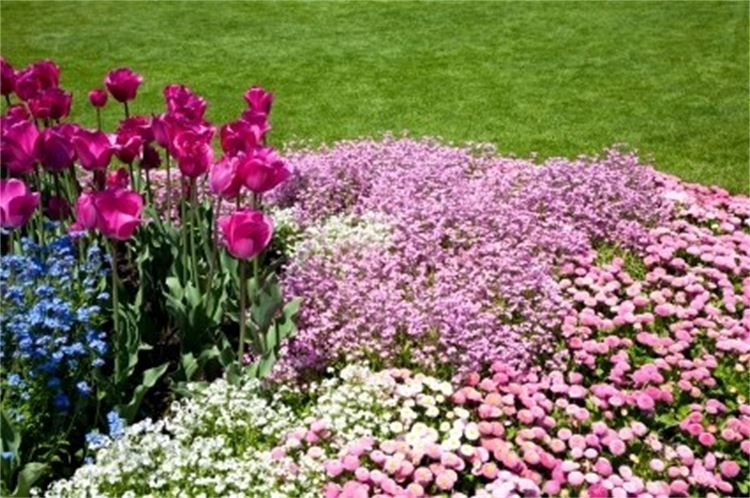 Beautifully arranged flower bed. Life Inspirations Page to lighten your day!