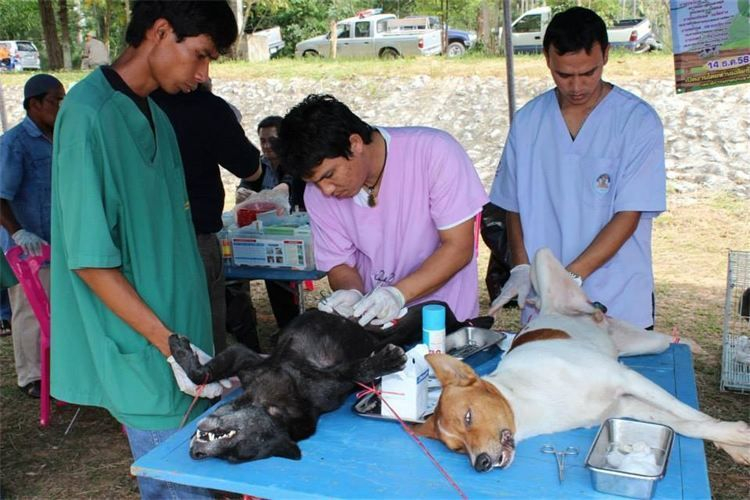 Hundehilfe Thailand. Unser Kastrationsprogramm. .