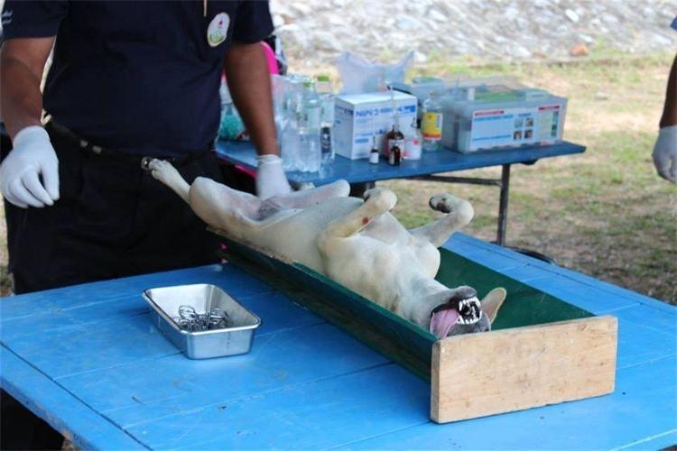 hundehilfe thailand op3