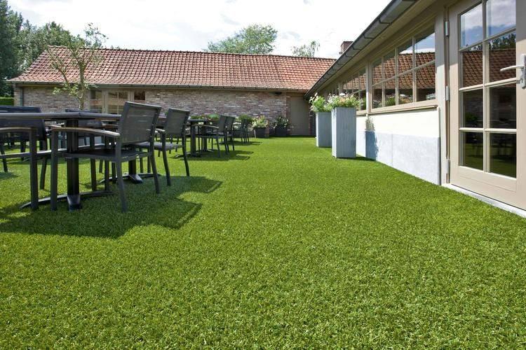 Oryzon Evergreen Grass Northern Ireland