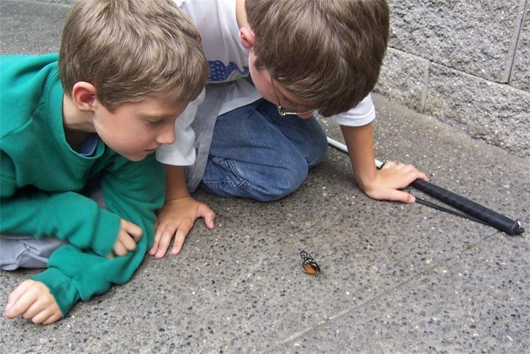 Two young boys looking at a butterfly on the group