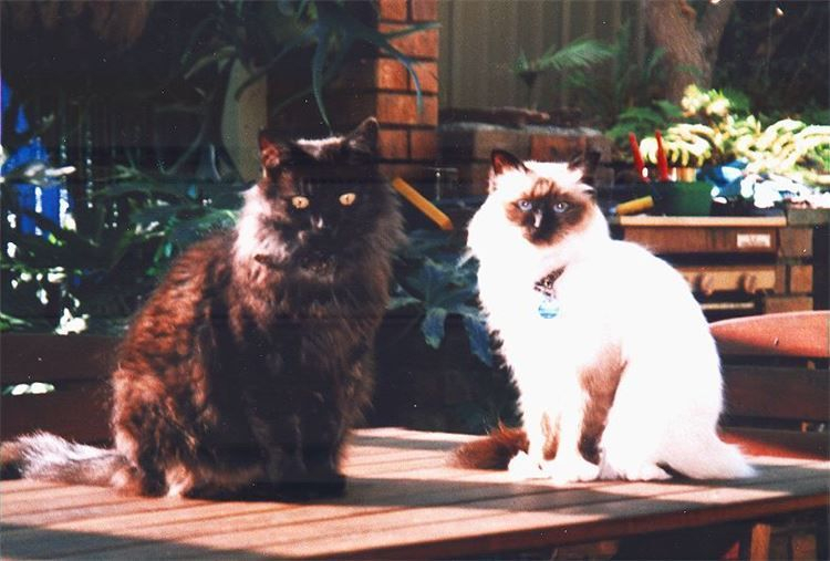 Whiskee & Coco, lovely girls