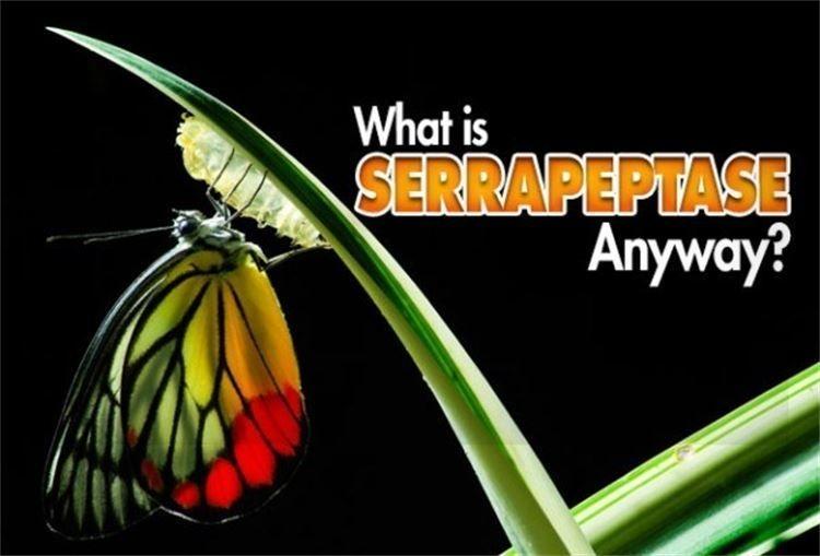 What is Serrapeptase