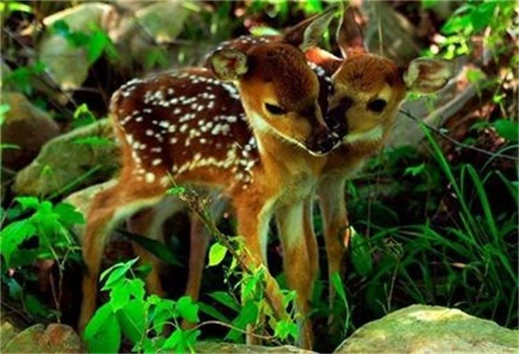 fawns waking energy of the new morning