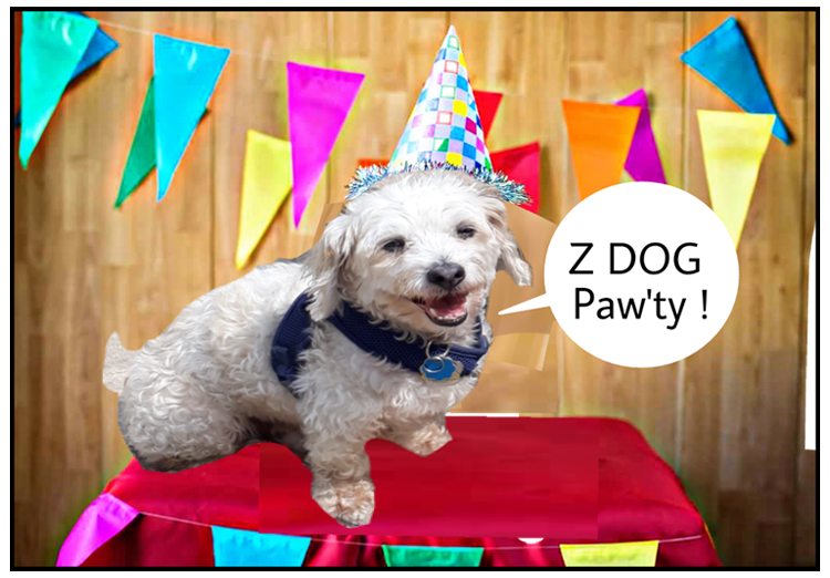 Z Dog Day care , overnight boarding pet sitting , dog walking joy for your pets
