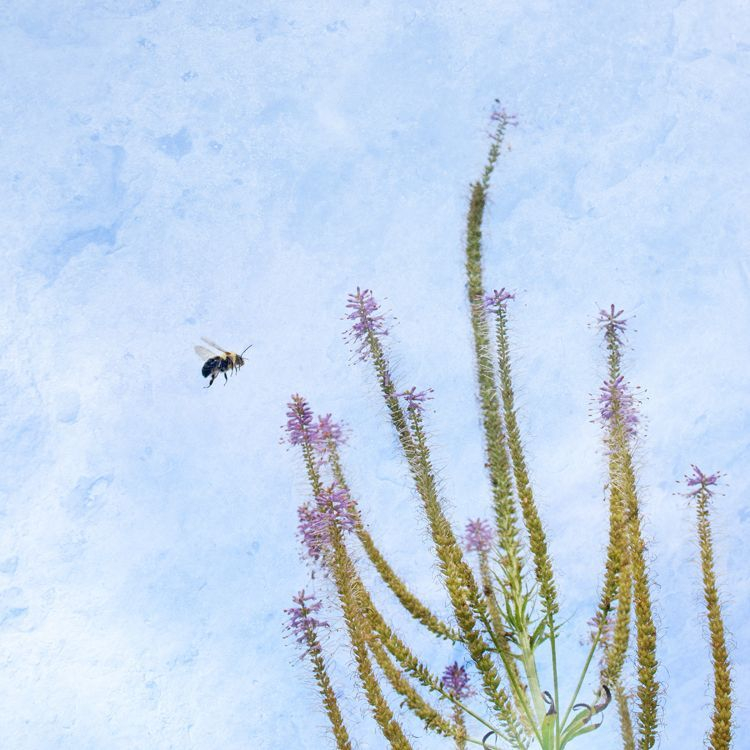 Flight of the Bumblebee by Sara Harley