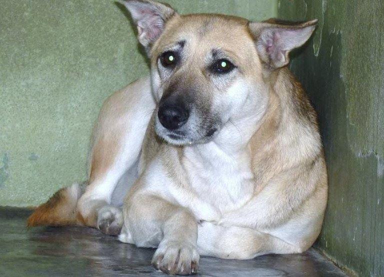 trauriger hund eingesperrt