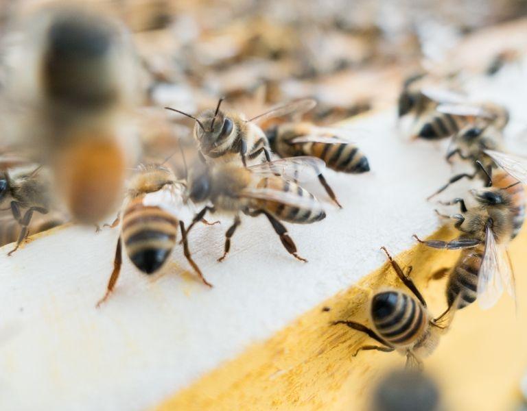 hive hosting bee hive, timberwind farm