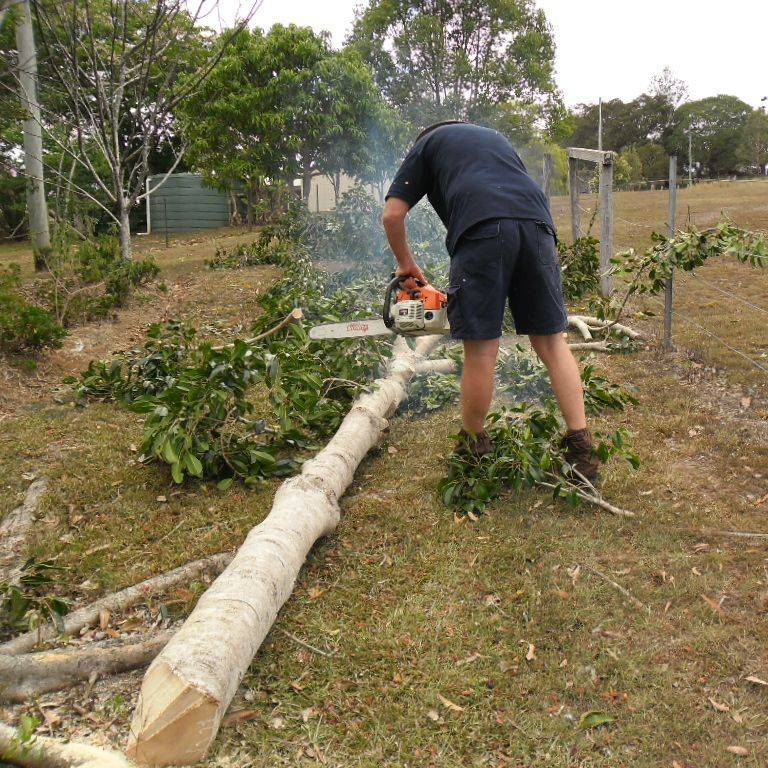 Our team at Gympie Home Handyman, Gardening & Maintenance Services felling & cutting up tree in Veteran