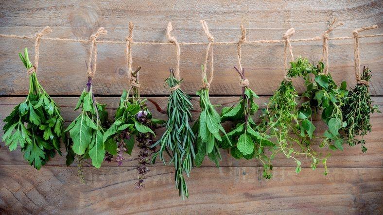 holistic herbalism herbalist plant medicine wellesley
