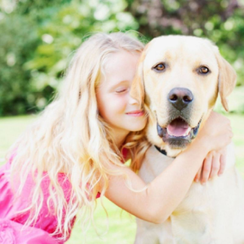 Healthy food for Labradors