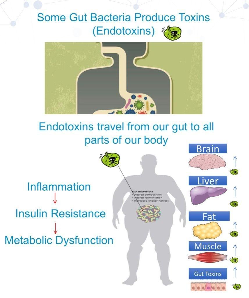Gut bacteria, gut health, inflammation, toxins, detox, microbiome