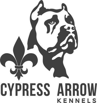 Cypress Arrow Cane Corso