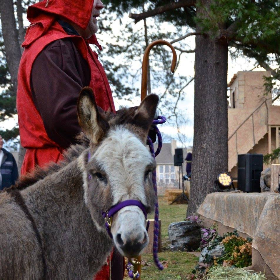Man dressed in nativity costume holding a donkey