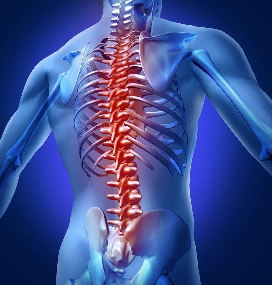 Male back skeletal image