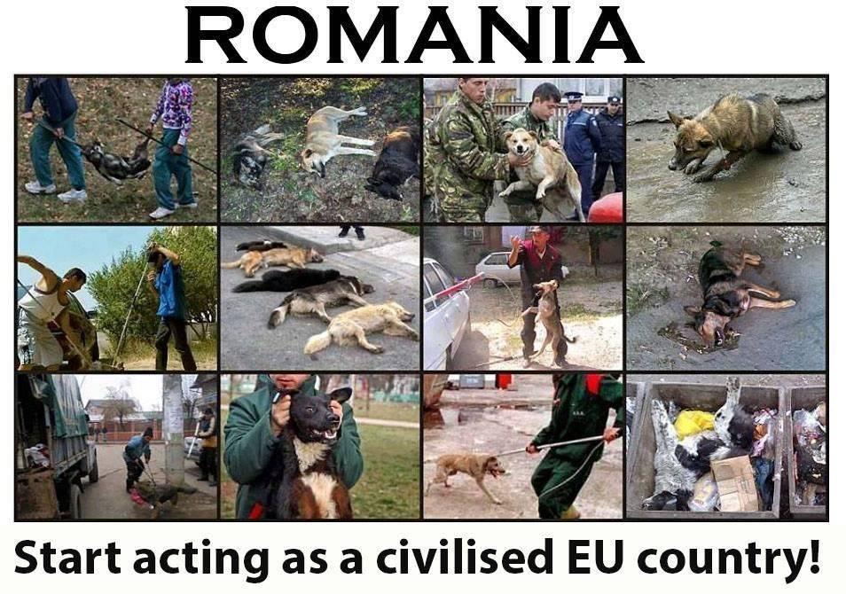hundeleid rumänien39