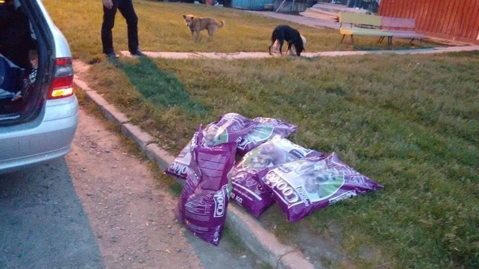 Marinica Speck Friedhofs- und Mülldeponiehunde12