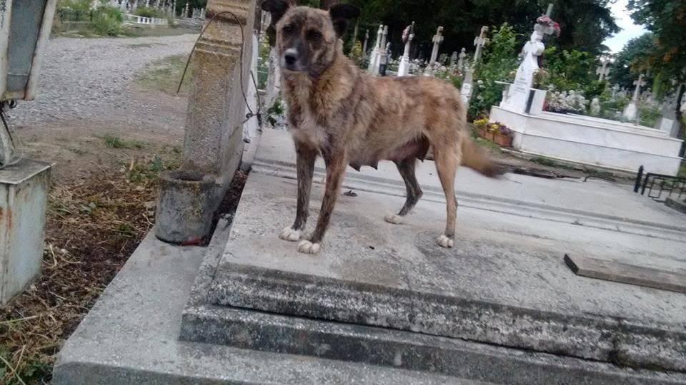Marinica Speck Friedhofs- und Mülldeponiehunde34