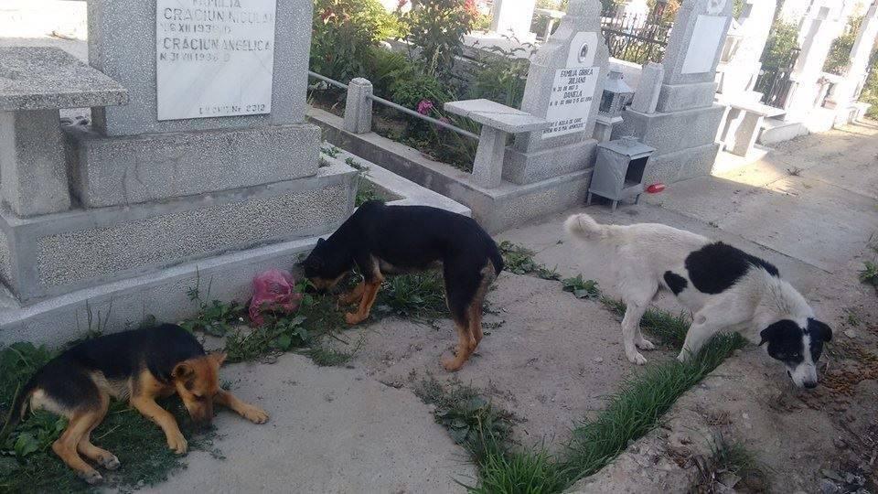 Marinica Speck Friedhofs- und Mülldeponiehunde30