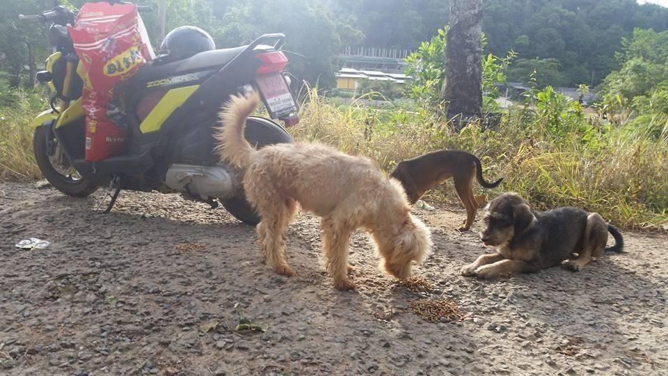 Martina MP Happy Dogs26