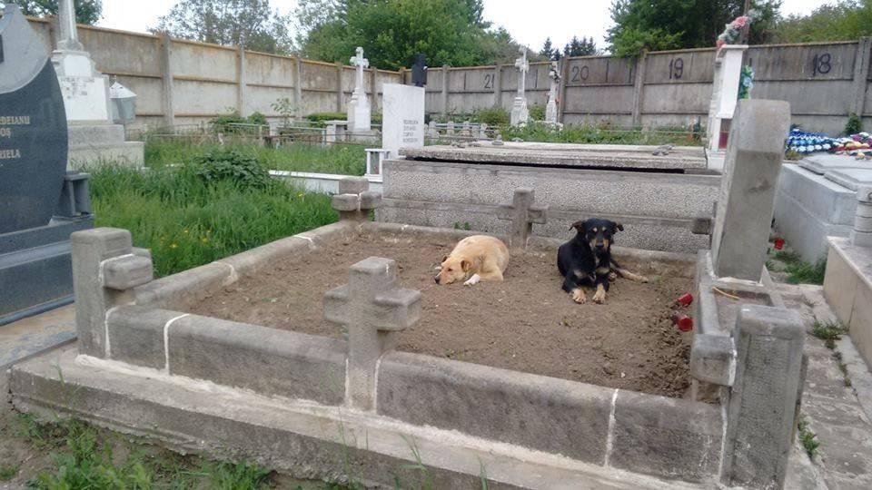 Marinica Speck Friedhofs- und Mülldeponiehunde10
