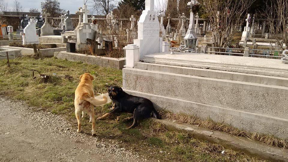 Marinica Speck Friedhofs- und Mülldeponiehunde25
