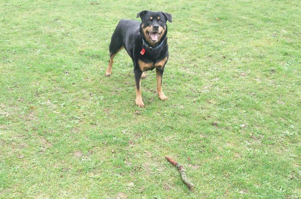 Dog Walking services Bedfordshire Hertfordshire