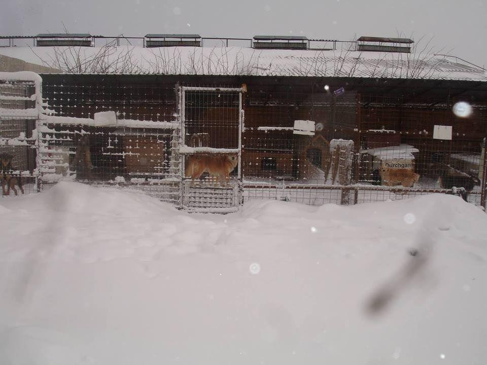 Pro Animal Welfare Hamburg. Radauti Nordrumänien Hütte draussenK