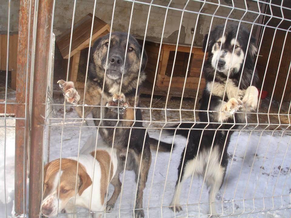 Pro Animal Welfare Hamburg. Radauti Nordrumänien Hütte draussenE