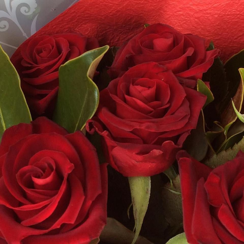 Deliver Roses Launceston Tas and Valentines Day Roses Launceston Tas 7250 from My Florist Westbury