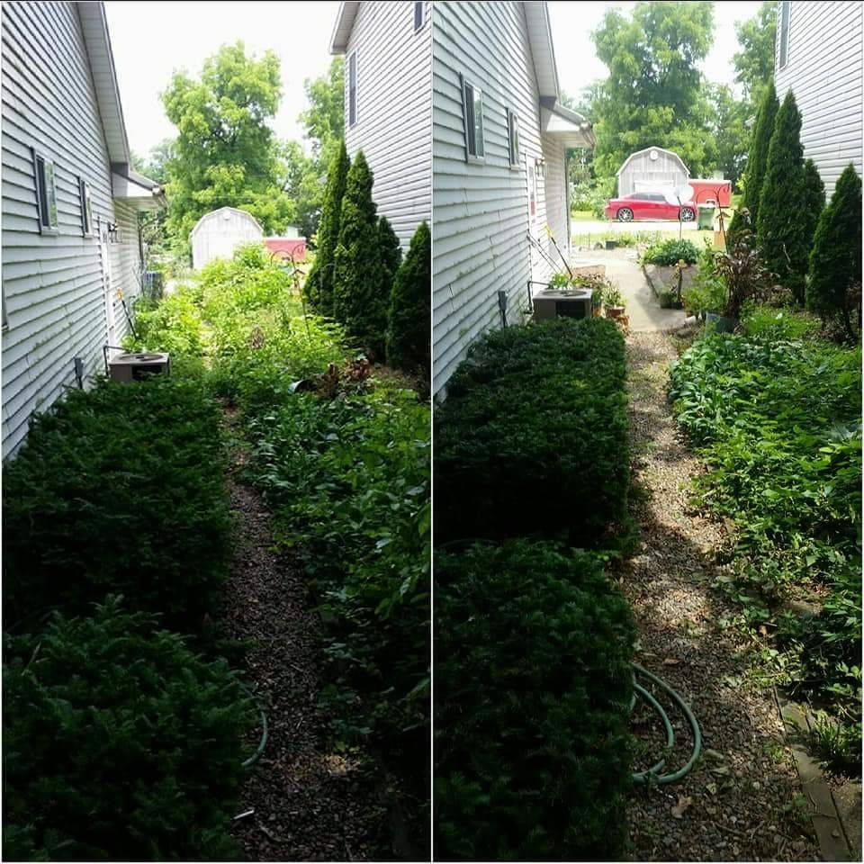 Before/After Weeding