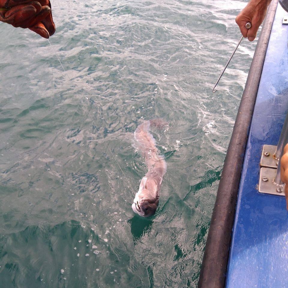 Greg Pitt Sea Fishing