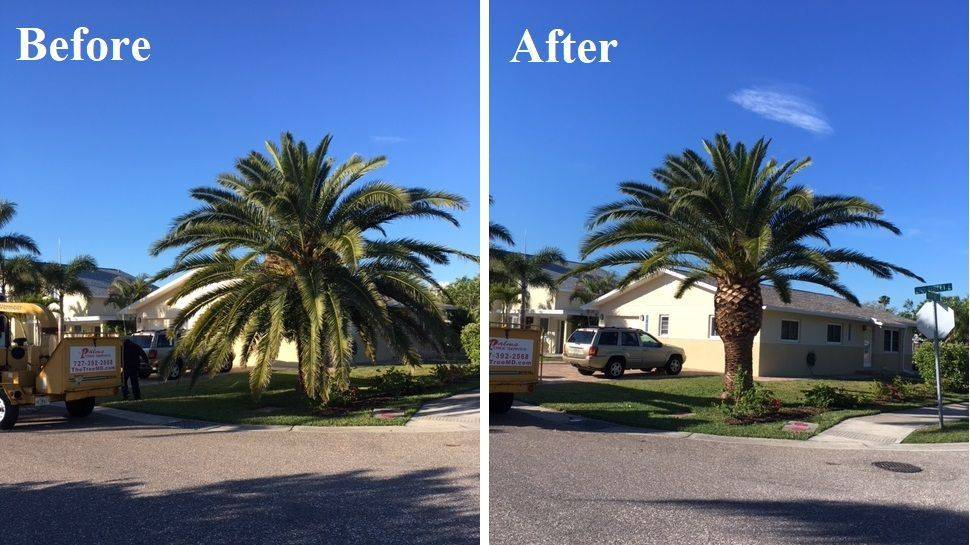 Another beautiful before and after from Graham Orr - The Tree MD
