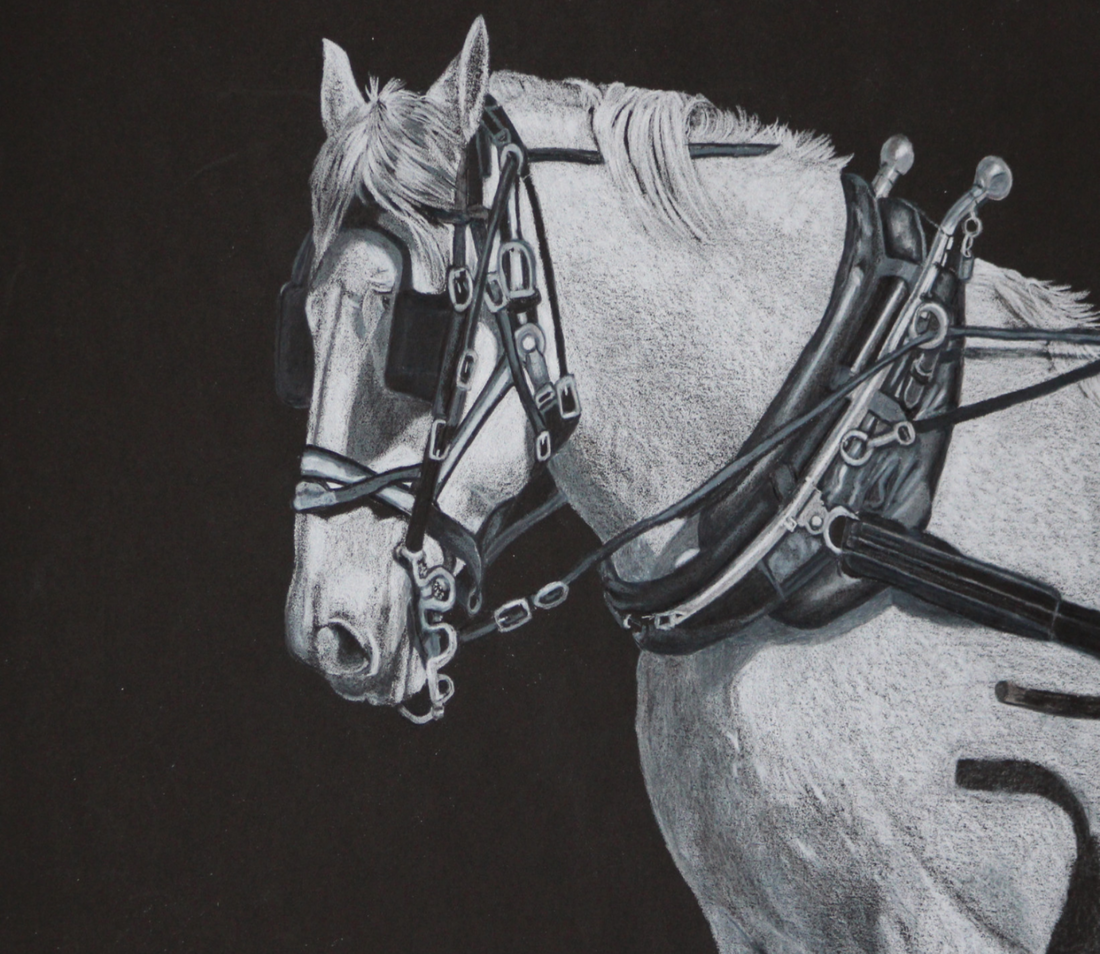 Colored Pencil drawing that was accepted in the CPSA National show in 2015