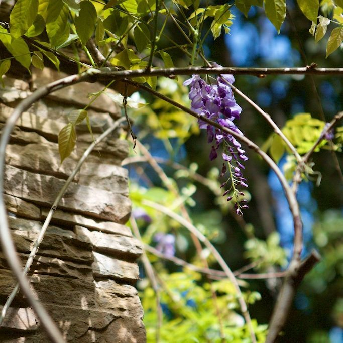 Kanapaha Gardens, Gardens in Gainesville, Gainesville, FL, Things to do in Gainesville, FL