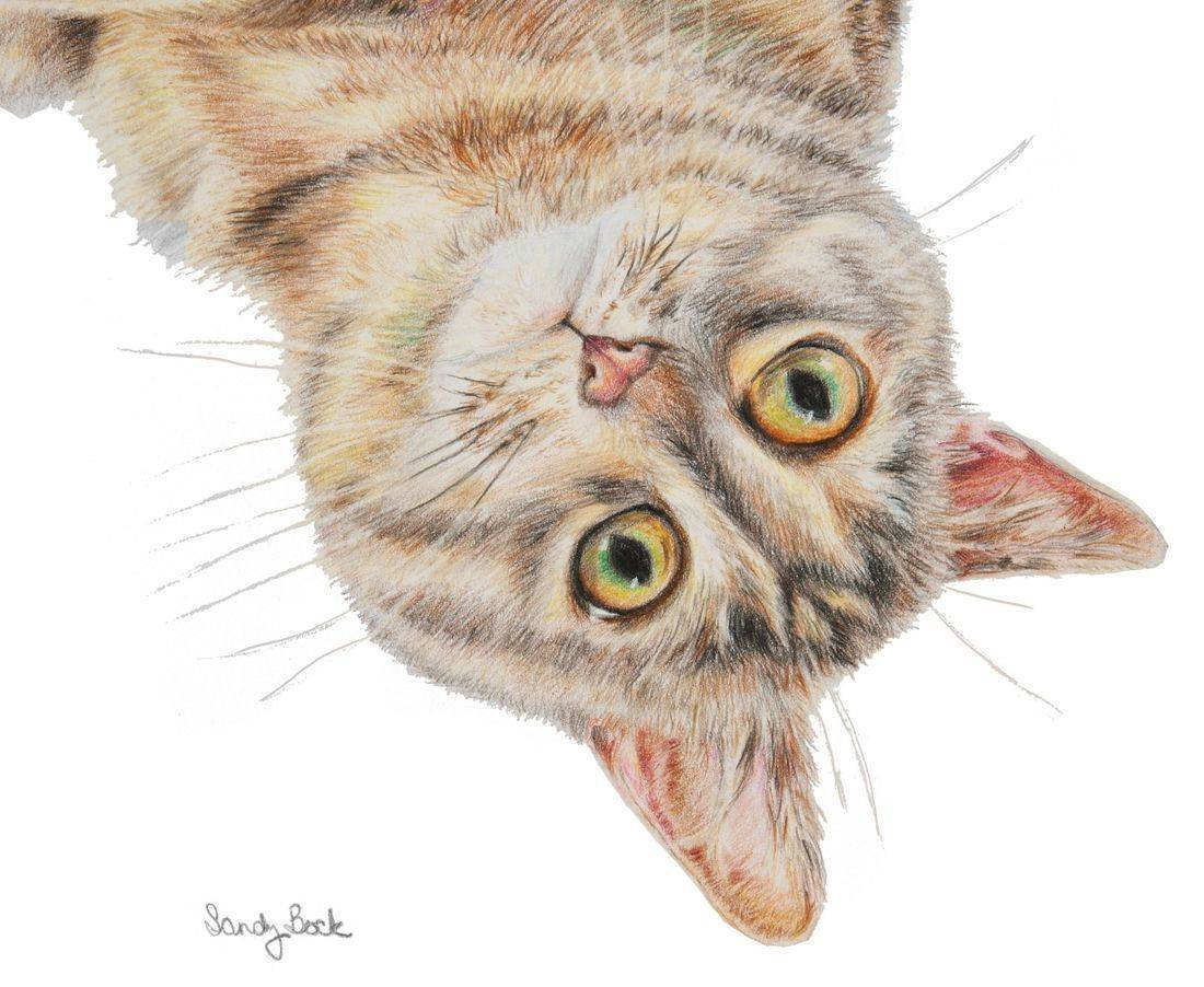 pet portrait cat