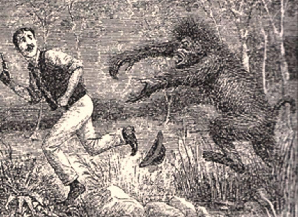 Bigfoot sighting, bigfoot santa cruz, sasquatch ben lomond