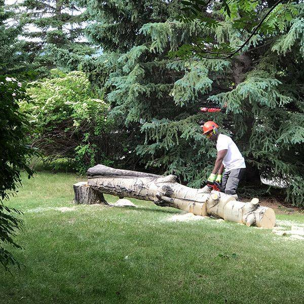 basement escavation snow removal renovation kitchen bathroom asbestos mre tree cutting stump grinding