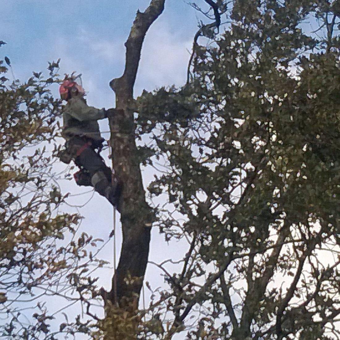 Tree Work Exmoor